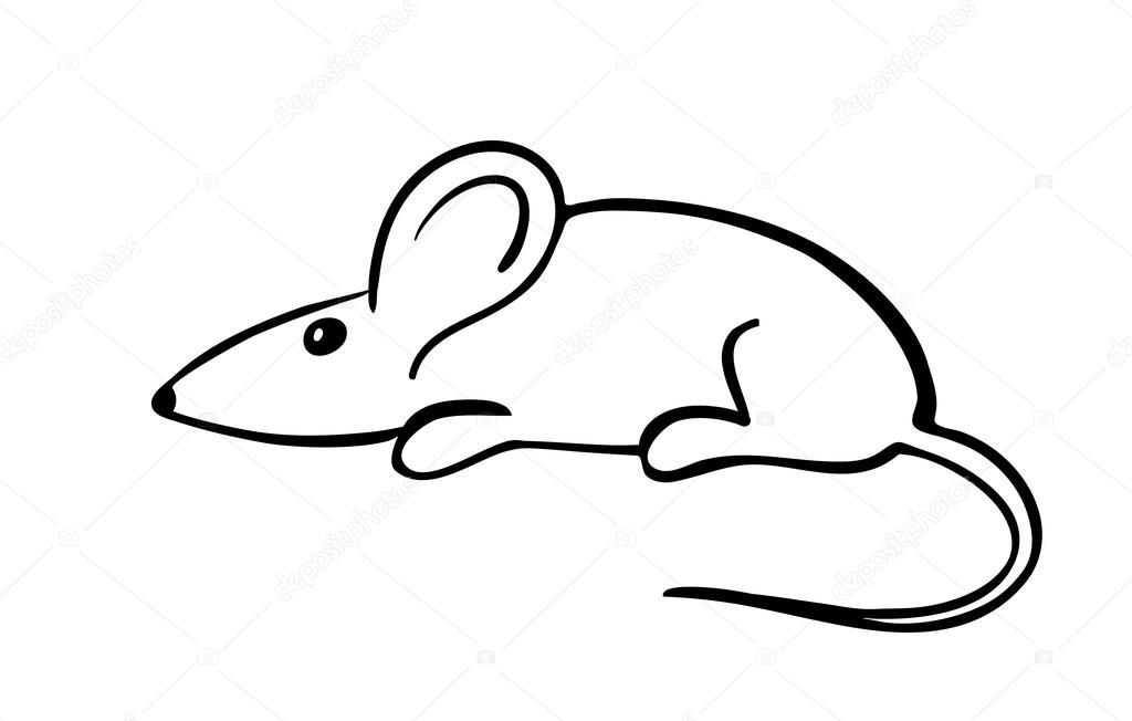 İzmit Yavuz Sokak'ta fare kabusu