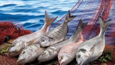Su ve hayvansal ürünlerde pazar; Ortadoğu