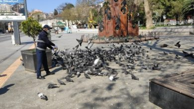 İzmit Belediyesi sokaktaki dostlarını yine besledi