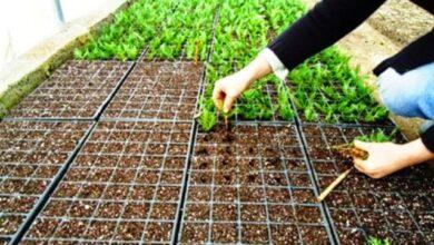 İzmit Belediyesi, daha yeşil bir İzmit için sera kuruyor