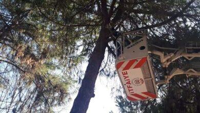 Ağaçta mahsur kalan kediyi itfaiye kurtardı