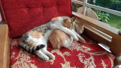 Kedi kardeşliği